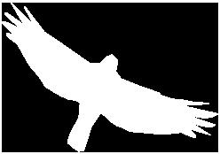bird-icon-retina