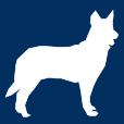 dog-small-icon-retina