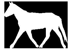 horse-icon-retina