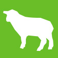 small-sheep-icon-retina